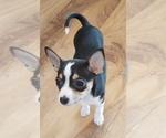 Puppy 4 Rat-Cha