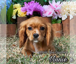 Image preview for Ad Listing. Nickname: Vinnie