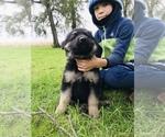 Small #51 German Shepherd Dog