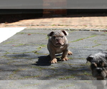 Small #18 Bulldog