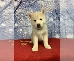 Image preview for Ad Listing. Nickname: Wolfdog