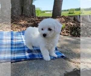 Cavachon Puppy for sale in CLARKRANGE, TN, USA