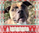 Small #191 American Pit Bull Terrier Mix
