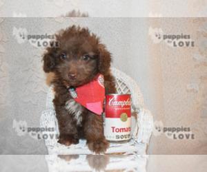 images puppyfinder com/AdInfo/5/5/d/55d61326099ff1