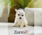 Small #3 Chihuahua