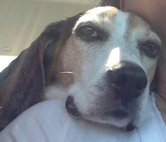 Free Dog Adoption Tampa Fl