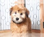 Small #2 Soft Coated Wheaten Terrier
