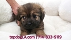 Morkie Puppy For Sale in LA MIRADA, CA, USA