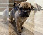 Puppy 5 Jug