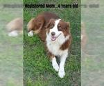 Small Photo #1 Australian Shepherd Puppy For Sale in CLARKSVILLE, TX, USA