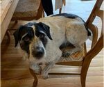 Small #4 German Wirehaired Pointer Mix
