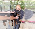 Small #97 Rottweiler