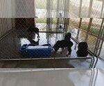 Small #93 Rottweiler