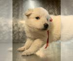 Small #40 German Shepherd Dog
