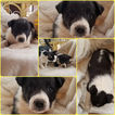 Only 2 rescue puppies left for adoption