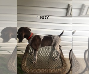 German Shorthaired Pointer Puppy for Sale in ENTERPRISE, Alabama USA