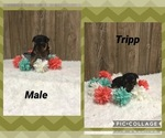 Image preview for Ad Listing. Nickname: Tripp