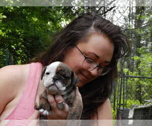English Bulldog Puppy for sale in MOUNTAIN TOP, PA, USA