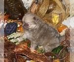 Small #14 Chihuahua