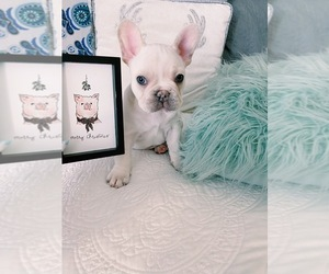 French Bulldog Puppy for Sale in NORCO, California USA