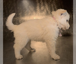 Small #32 German Shepherd Dog