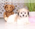 Petunia Darling Teddy Bear