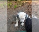 Small #5 Bernese Mountain Dog Mix
