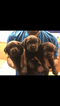 Labrador Retriever Puppy For Sale in RIPON, CA, USA