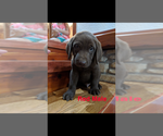 Small #9 Labrador Retriever