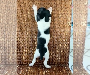 German Shorthaired Pointer Puppy for sale in RIVERVIEW, FL, USA