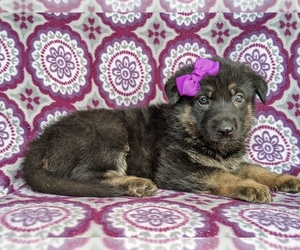 German Shepherd Dog Puppy for sale in KIRKWOOD, PA, USA