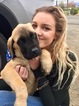 Mastiff Puppy For Sale in LAKEPORT, CA
