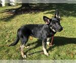 Small #13 German Shepherd Dog Mix