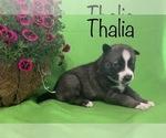Image preview for Ad Listing. Nickname: Thalia