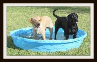 Labrador Retriever Puppy for sale in PUNTA GORDA, FL, USA
