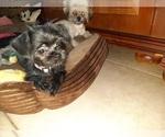 Puppy 3 ShiChi