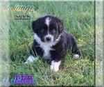 Image preview for Ad Listing. Nickname: Jango