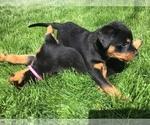 Small #30 Rottweiler
