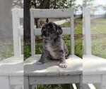 Small #3 Puggle