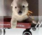 Small #34 German Shepherd Dog