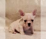 Image preview for Ad Listing. Nickname: Angi