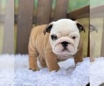 Small #1 Bulldog