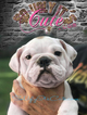 Bulldog Puppy For Sale in HOUSTON, TX,