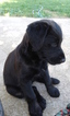 2 female puppies ready September 30