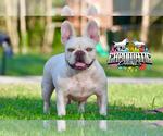 Small Photo #1 French Bulldog Puppy For Sale in CHRISTIANA, TN, USA