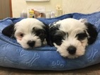 6 week old boy and girl