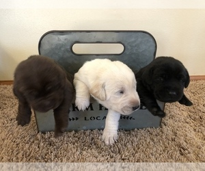 Puppies For Sale Near Marion Wisconsin Usa Page 1 10 Per Page