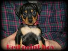 9 puppies ready for homes