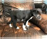 Small #1 Jack-Rat Terrier