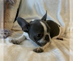 Small #2 French Bulldog